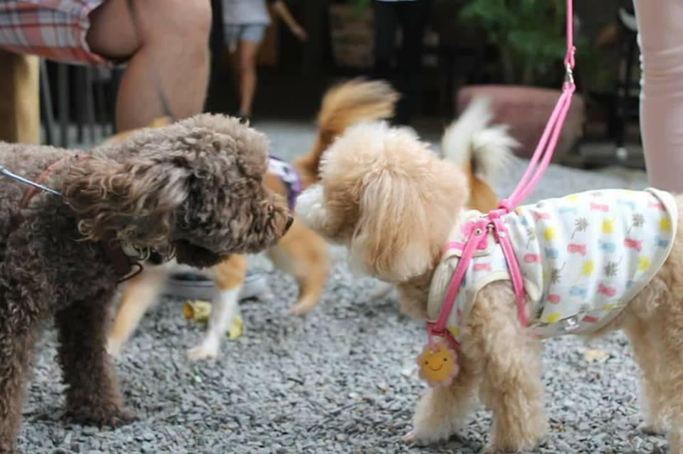 【ワンちゃんと触れ合える!】12月3日(日)にDoggy Friend Dayが開催