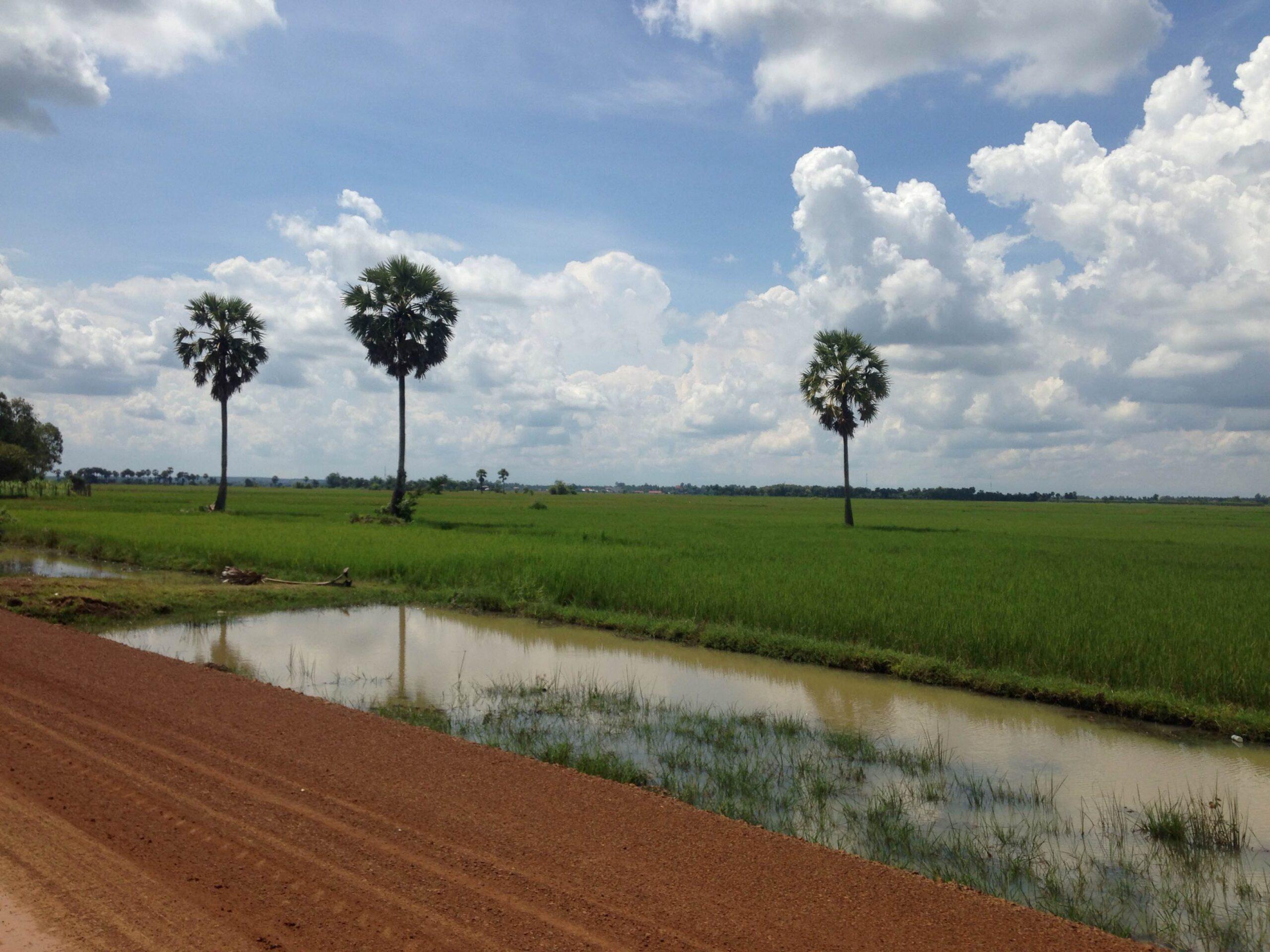 【NyoNyumインターン日記㉕】これがカンボジアのプチュンバン~トゥクトゥク編~