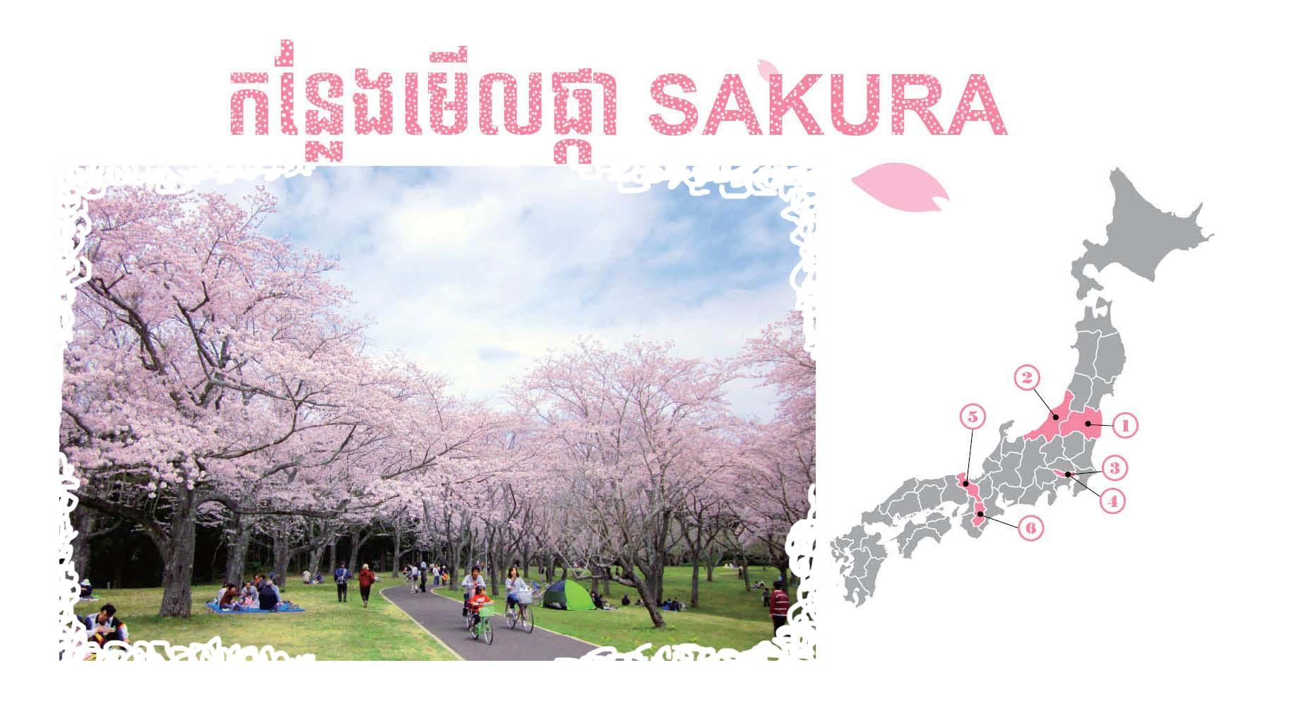 (ភាសាខ្មែរ) កន្លែងមើលផ្កា SAKURA 【Special2】